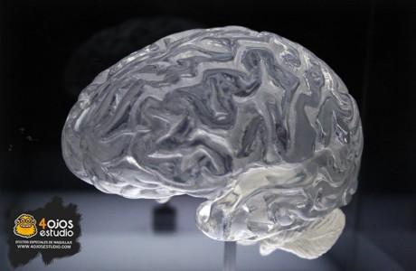 Cerebros-fundacion-lacaixa1